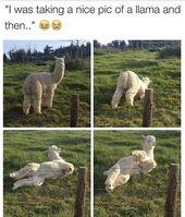 10 Memes des Tages für Freitag, den 07. September …