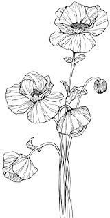 Image Result For Draw Begonia Step By Step Flower Drawing Poppy
