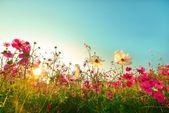 Plantes pour le soleil de plomb: Le top 10 du jardin et du balcon