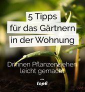 5 Tipps für den Garten in der eigenen Wohnung 5 gibt #dasjenig …   – Gärtnern  – Every DIY