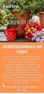 Garten für die Faulen: Gemüse in einem Topf anbauen   – Gemüse