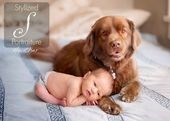 Little Peanut Baby Photography Baby Dogs Baby Pictures