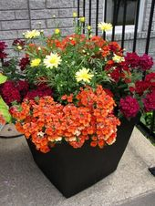 44+ Fantastic Summer time Container Backyard Flower Concepts