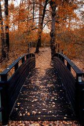 ♡ #autumnscenes plasmatics-life:  Sorgenti Lavino | Italy ~ By Nicola Marrama