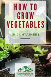 Growing Vegetables In Containers – Vegetable Container Gardening Tips