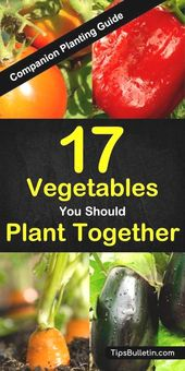 #Companion #planting #information  Companion planting information for 17 completely different vegetable…