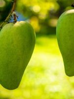 تحميل كتاب زراعة المانجو Pdf Books Mango Fruit