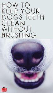 Das Geheimnis, die Zähne Ihres Hundes sauber zu halten, ohne zu putzen – Pets, dog, cats and more
