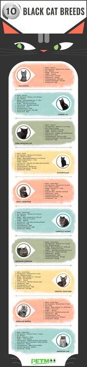 Schwarze Katze züchtet Infografiken