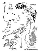 Birds Of The African Savanna Coloring Page Coloring Pages Color Color Activities