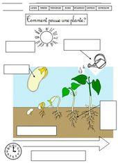 File sur les végétaux: croissance d'une plante, outils pour jardiner, dif…