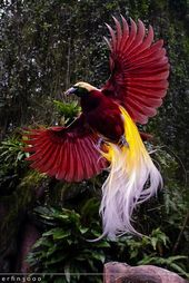 TOP 10 Greatest Birdwatching Spots across the World