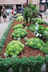 Wie man eine saftige Schildkröte macht – Gartenideen