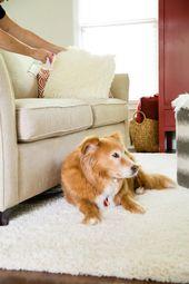 13 Tipps zur Reinigung von Haustieren   – Dogs & Cats