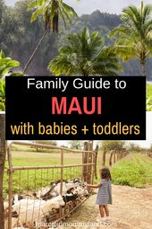 Full Information to Maui with Children (Resorts, Seashores, Actions + Extra!)