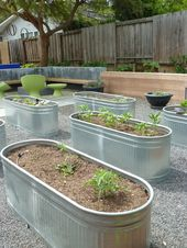 Vegetable backyard in cheap feed troughs