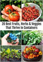 20 besten Früchte, Kräuter und Gemüse, die in Containern gedeihen