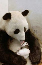 Lustig Susse Tiere Babytiere Wilde Tiere