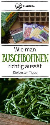 Bohnen pflanzen: Anleitung zum Anbauen von Bohnen