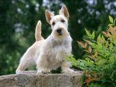 ► ஜ la Azulestrellla ஜ ۩۞۩ ۩۞۩: ► Bilder von schönen Hunden …  – PERRITOS Y PERROTES
