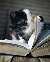 Was ist dein Lieblingszitat? #Lesen #Angebot #Bücher #Katze #schreiben #gelesen