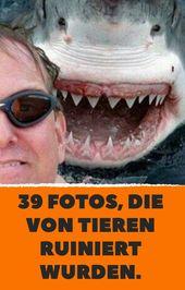 39 Fotos, die von Tieren ruiniert wurden.