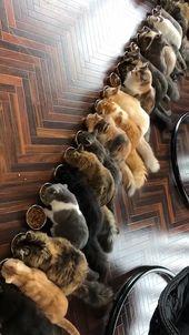 Eine Gruppe von Katzen essen   – Смешной юмор