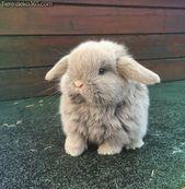Grande potographie avec de jolis lapins   – Süße Tiere