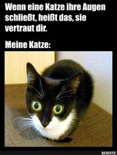 Wenn eine Katze ihre Augen schließt .. | Lustige Bilder, Sprüche, Witze, echt …