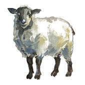 Sheep Eid Al Adha Sheep Clipart Sheep Sheeps Png Transparent Clipart Image And Psd File For Free Download Sheep Illustration Sheep Vector Animal Clipart