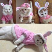 Diseño de conejo Ropa para mascotas Ropa para gatos de invierno Ropa linda para mascotas para gatos Sudadera con capucha Chaqueta para mascotas cálida Suéter Traje de Navidad 11d3S2   – Kitty Cats