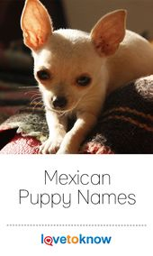 Mexican Puppy Names In 2020 Cute Names For Dogs Puppy Names Cute Cat Names