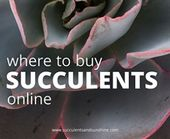 Well draining soil for succulent container gardens  – succulents
