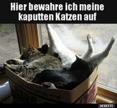 Hier bewahre ich meine kaputten Katzen auf.. | Lustige Bilder, Sprüche, Witze, … – Lustige und Komische Dinge