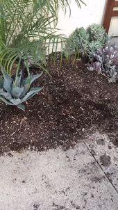 Succulent Garden Planting!  – Youki Do It (DIY)
