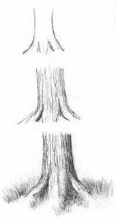 100 Wie zeichnet man Tutorials – Zeichnen Sie Bäume mit Bleistift – Augen, Haare, Gesicht, Lippen, Peo