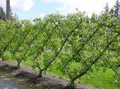 24+ Ideen Obstbaum Obstgarten Zaun   – Garden