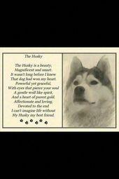 Siberian Husky Funny   – Inspirational pets