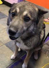 38488137 Located In El Paso Tx Has 6 Days Left To Live Adopt Him Now Dog Adoption Dogs Shelter Dogs