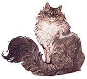 Norwegischer #Wald #Katze #Zeichnung #und #Farbe #von