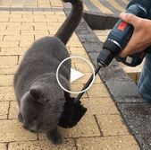 You will LAUGH SO HARD that YOU WILL FAINT – FUNNY CAT compilation #12 #cute dog… – funny animals