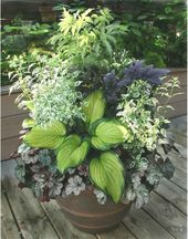 Shade Container Backyard Flowers Concepts #backyard #Container #containergarden #Flower…