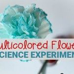 Multicolored Flower Science Experiment – The Kindergarten Connection