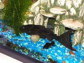 # Acuario # Limpio # Fácil # Agua dulce Cómo limpiar un acuario de agua dulce …   – Aquarium