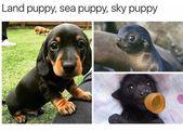 Land Puppy, Sea Puppy, Sky Puppy