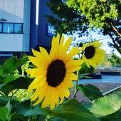 Es ist schön auf dem Campus Grifflenberg mit Blick über die Stadt. 🌻🌻. ,, # …   – garten