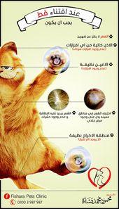 Wie wählt man die neue Katzeninf …