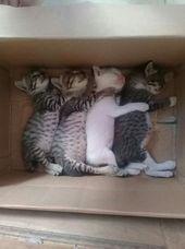 Viele Katzen haben den Ruf, schüchtern zu sein und sich unter dem Bett zu verstecken …