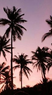 68 Ideas Palm Tree Iphone Sunsets