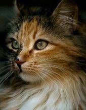 Pin By Mary Hughes On Beautiful Kitties Cats Cute Cats Pretty Cats